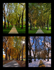 Through the Seasons at the Colorado State University Oval (Fort Photo) Tags: trees tree nature season landscape vanishingpoint colorado seasons mosaic year fourseasons co elm soe oval csu 2007 4seasons coloradostateuniversity clff mywinners abigfave anawesomeshot aplusphoto gruosss betterthangood
