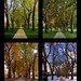 Through the Seasons at the Colorado State University Oval - by Fort Photo