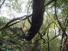 Loooong branch (ulysses68) Tags: china yangshuo guanxi
