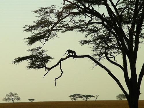 Fotos de safari