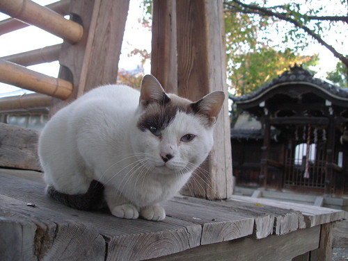 Today's Cat@20071119