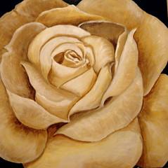 cream rose (perseverando) Tags: white rose painting acrylic cream boxcanvas mywinners betterthangood