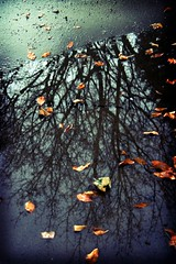 Puddle Leaves Trees Reflected Lomo (TylerKnott) Tags: trees reflection puddle leaf lomo reflect fakelomo lomoeffect tylerknottgregson