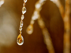 """Nature's Jewelry"" (muledriver) Tags: winter fab ice nature drops bokeh smorgasbord blueribbonwinner macromarvels goldstaraward astunningmoment"