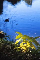 Natural Spot light (neko_mania_r) Tags: autumn lake fall film leaves japan tokyo leaf natural spotlight eos3 sunbeams tamronmodela09