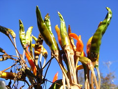 Plants with the blue sky