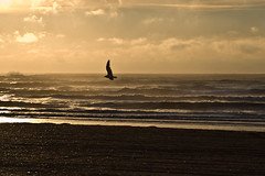 Taking Flight (Miracle Man) Tags: ocean travel sea orange sun black bird beach silhouette fauna clouds sunrise landscape freedom newjersey nikon seagull flight scenic peaceful atlantic shore atlanticcity d200 atlanticocean avian miracleman robmiracle