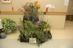 Elmore Orchids Display
