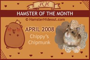 HOTM-Apr08-Chippy