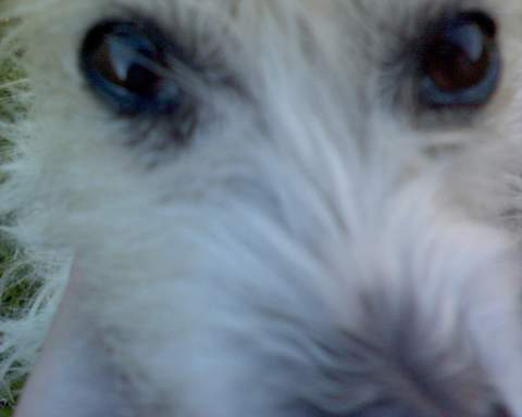 Max - Up Close