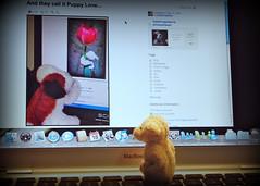 watching you watching me (Singing With Light) Tags: dog sheep pentax laptop k200d macbookair bahbahra
