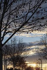 4283-2016-BR (elfer) Tags: puestasdesol árboles contraluz rivasvaciamadrid madrid españa