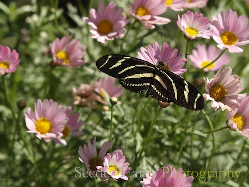 Butterfly Exhibit at Desert Botanical Garden