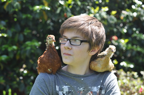 a boy and his chickens