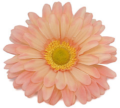 Daisy Flower (HopeChestJewelry.com) Tags: flower fakeflower artificialflower apricotflower daisyflower