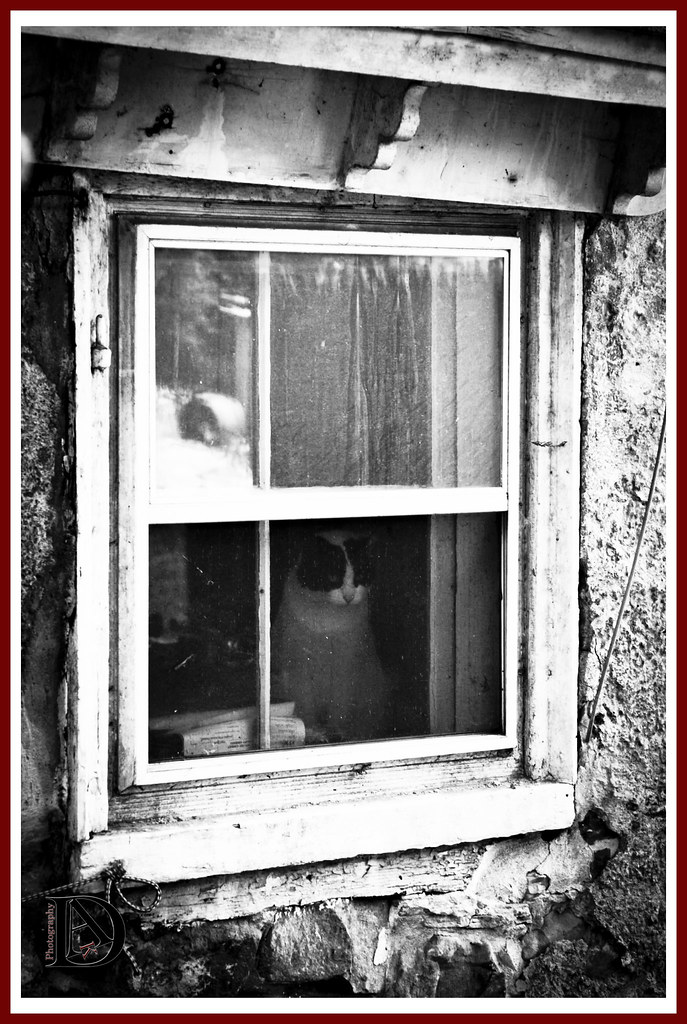Cat & Window