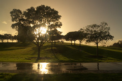 Moisty Morning (Mariasme) Tags: trees mist stpeters reflection water sydney silhouettes australia thechallengefactory