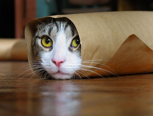 Subway 6 inches cat sandwich?