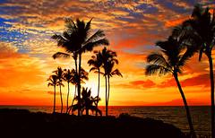 Tropical Sunset (janruss) Tags: tropical hawaii maui sunset palmtrees superbmasterpiece platinumphoto vivid colourartaward coloursplosion supershot fab bravo artlegacy naturescall platinumheartaward thebigone goldenmix wonderfulworldmix astunningmoment worldbest breathtaking megashot impressedbeauty world100f flickrplatinum infinestyle faveme distinguishedsunsets blueribbonwinner shieldofexcellence soe citrit pictureperfect cubism great123 goldstaraward treeofhonor superfaveme firstquality cotcmostfavorited 3000v120f the4elements alemdagqualityonlyclub bestofsummer brilliant~eye~jewel passionphotography golddragon theunforgettablepictures magicdonkeysbest multimegashot colorphotoaward bej brillianteyejewel colorphotoawardbronze elitephotography 100commentgroup outstandingshots passionateinspirations sensational flickrsbest colorphotoawardsilver colorphotoawardgold grandoracle oracogp janruss janinerussell saariysqualitypictures bec newgoldenseal thesuperbmasterpiece holidaysvacanzeurlaub thegalaxy flickrstruereflectionlevel7 flickrstruereflection6