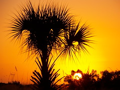 Tangerine Sky (aneye4wonder (Ineta McParland)) Tags: sunset tangerine blueribbonwinner splendiferous