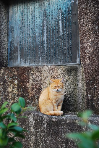 Temple Cat - Koyasan
