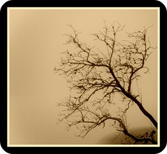 Tree, cloud,Ice and Picnik (Rebel Tucser) Tags: germany baden blackforest picnik mummelsee ortenau