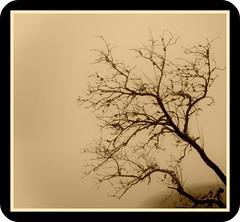 Tree, cloud,Ice and Picnik (Rebel Tucser) Tags: germany baden blackforest picnik mummelsee ortenau