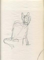 cat gesture drawing