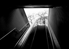trees (telmo32) Tags: sanfrancisco blackandwhite bw monochrome publictransit explore muni transit creativecommons golddragon churchstation abigfave diamondclassphotographer searchandreward bwartaward top20grey telmo32 sanfranciscotransit californiatransit