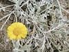 Yellow Flower (madriverrose) Tags: cassidy patricia bestnaturetnc06