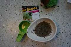 soak your chia seeds