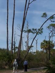 Honeymoon Island State Park (kthypryn) Tags: trees nature florida parks dunedin honeymoonisland
