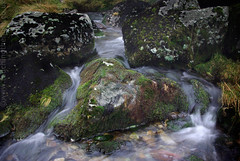 """2008_366026 - Love in the Stream • <a style=""""font-size:0.8em;"""" href=""""http://www.flickr.com/photos/84668659@N00/2228282148/"""" target=""""_blank"""">View on Flickr</a>"""