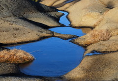 Rock and puddle (AstridWestvang) Tags: reflection water rock puddle larvik brunlanes