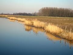 Creek in Zeeland (Nicolas_T.) Tags: water netherlands creek reeds eau zeeland zealand paysbas roseaux