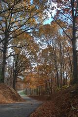 Back road in VA (VangieBug) Tags: fall virginia countryroad photofaceoffwinner