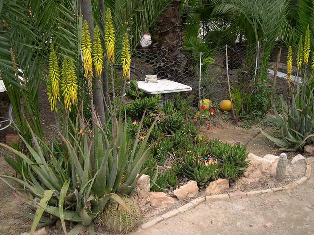 En tu jard n - Jardines con cactus y piedras ...