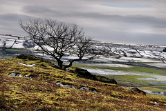snow on the hills and not in the dales (Dan65) Tags: uk winter england snow tree field countryside dale britain yorkshire hill valley moor dales embsay