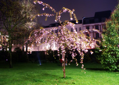 a blooming tree, Luminale 2008 (Suzanne's stream(slowly coming back)) Tags: night germany nacht soe nizza frankfurtmain bloomingtree blhenderbaum theunforgettablepictures luminale2008