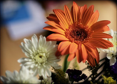 Thinking of you (neelgolapi) Tags: flower thinkingofyou gerberadaisy explored canoneosdigitalrebelxti