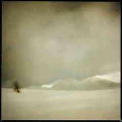 lonely tree (anders mörtsell) Tags: winter snow mountains tree clouds landscape lappland lapland chapeau plus kittelfjäll palabra borkan 500x500 bsquare fjäll blueribbonwinner västerbotten justimagine artlibre marsfjällen landscapeexhibition betterthangood thegardenofzen thesecretlifeoftrees goldstaraward borkafjäll artistictreasurechest