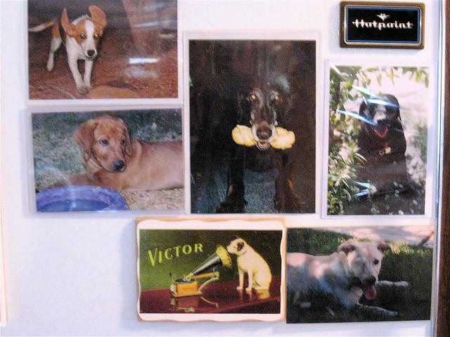 Fridge Dog Fame Wall