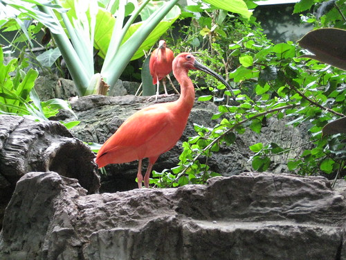Central Park zoo: pink bird