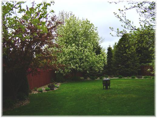 Spring Yard Update
