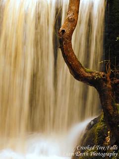Crooked Tree Falls