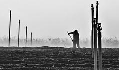 working the new blueberry patch... (al-ien) Tags: blueberries farm worker farmworker migrant sprinkler florida mymorningwalk