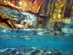 Porites Coral Reflected On Water Surface (ladigue_99) Tags: maldives biyadhoo southmaleatoll coralreef indianocean atoll lakshadweepsea barrierreef poritescoral southernhemisphere summer january