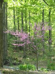 Purple (jnoc) Tags: massachusetts montague paperroute montaguereporter