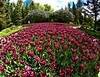 15 mm View (Ken Yuel Photography) Tags: flowers nature beauty tulips parkbench springflowers sigma15mmf28 digitalagent kenyuel assiniboineparkwinnipeg redflowersleomolgardens