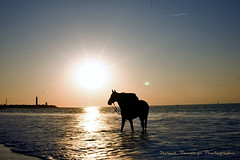 One (Jerome Pouysegu) Tags: ocean sunset sea horse mer beach de cheval soleil coucher 5d plage